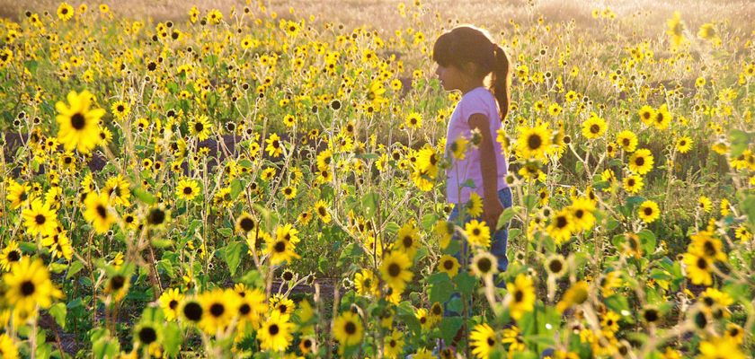 sunflower_littlegirl.png